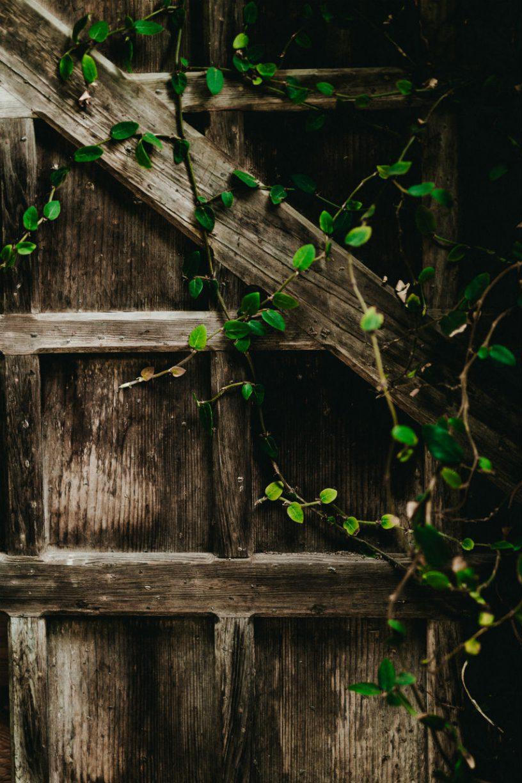 hillhouttuinhout.nl voor de tuinverbouwing
